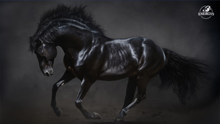 SET OF WALLPAPERS - BLACK STALLION