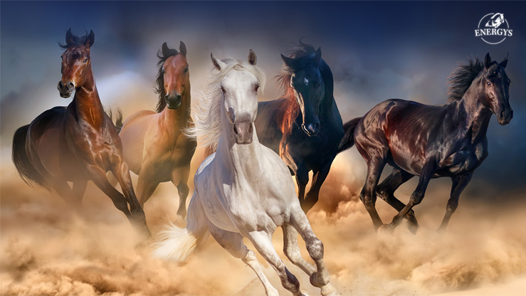 SET OF WALLPAPERS - HORSES