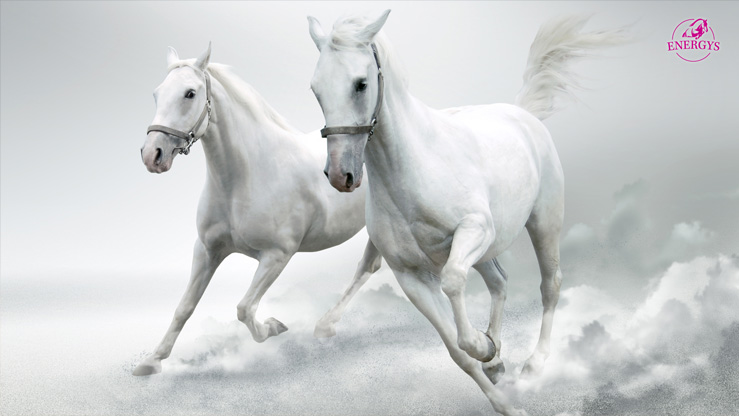 SET OF WALLPAPERS - WHITE HORSES